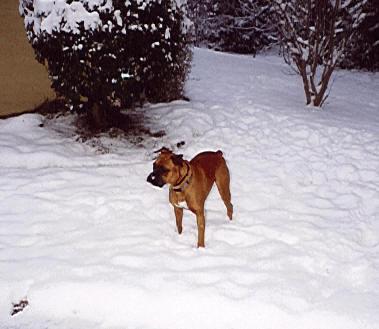 McGee snow 2gif