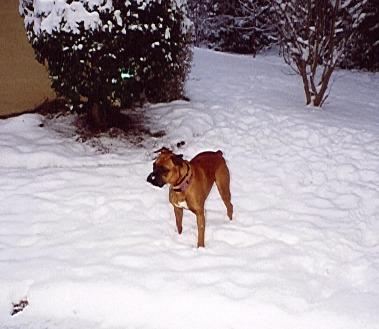 McGee snow 2jpeg